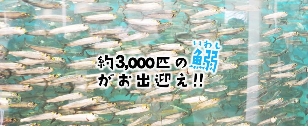 catch02